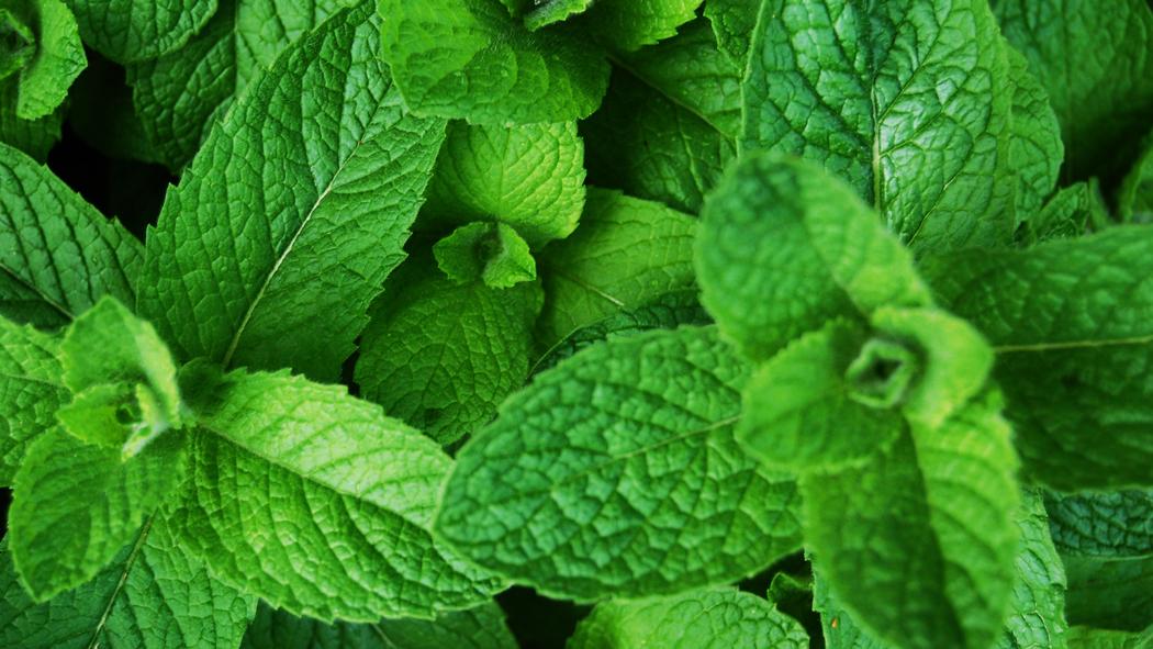 food-focus-peppermint-herbs-101 vd0EI5